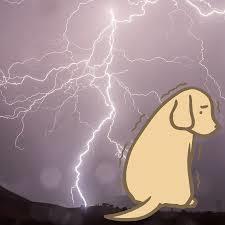 かみなり犬3