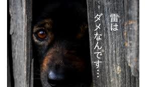 かみなり犬2