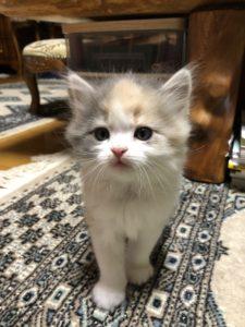さん子猫3